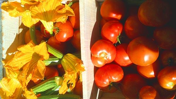 ingredienti freschi genuini e locali estivi ristorante toscano ad arezzo