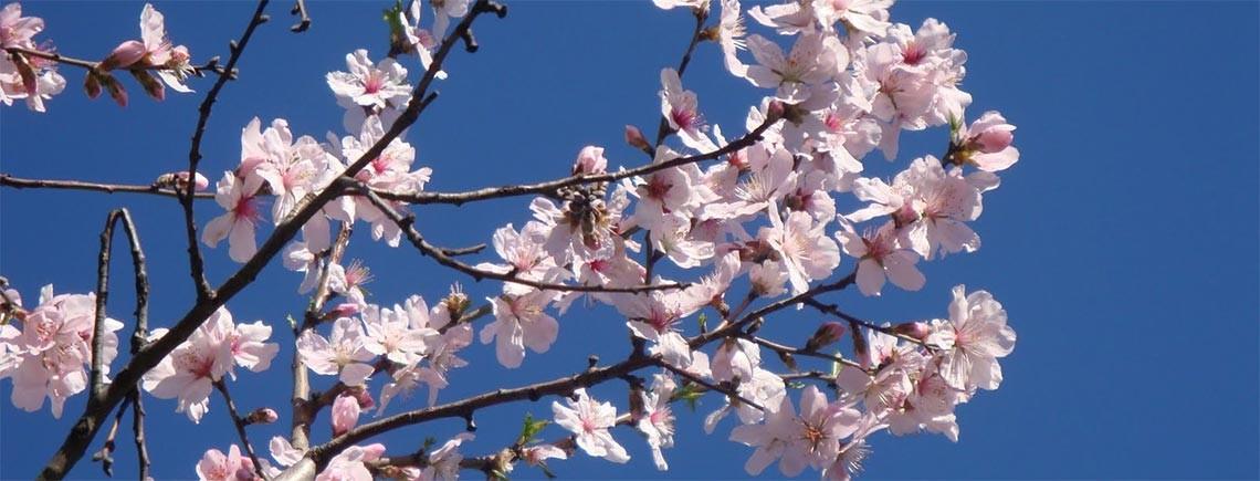 festeggia la primavera con una cena al ristorante di monte san savino la torre di gargonza